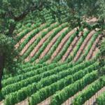 Rolling Hillside Wineries