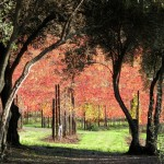 Kunde Winery