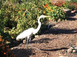 2020-11-15 Community Garden