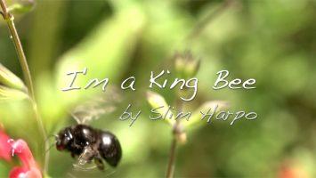 I'm A King Bee Title Still, 2020