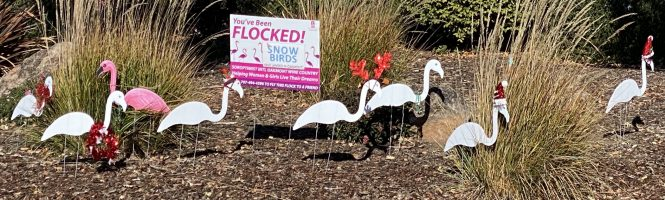 snow bird flamingo flock banner